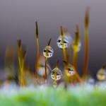 Droppar - Foto: Viktor Sundberg