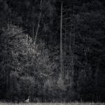 Trana - Foto: Viktor Sundberg