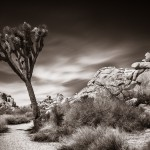 Joshua Tree National Park, Kalifornien - Foto: Viktor Sundberg