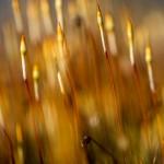 Små växter på en stengärdsgård - Foto: Viktor Sundberg