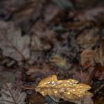 Döda löv - Foto: Viktor Sundberg