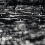 Smålom i regn - Foto: Viktor Sundberg