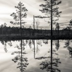 Knuthöjdsmossen - Foto: Viktor Sundberg