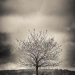 Ett ensamt träd - Foto: Viktor Sundberg