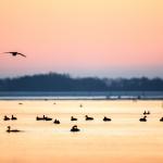 Morgonfåglar - Foto: Viktor Sundberg