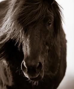 Blick för hästar