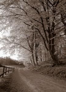 Landsväg mellan äng och skog