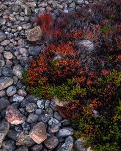 Vinden griper tag i växtligheten - Foto: Viktor Sundberg
