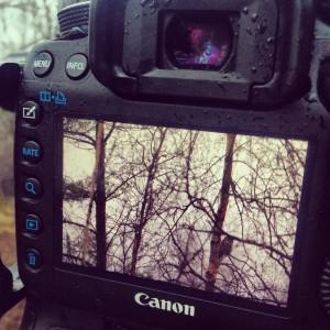 Hökuggla i kameradisplay