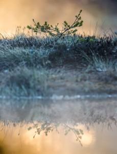 Liten växt på Knuthöjdsmossen - Foto: Viktor Sundberg