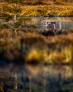 Smålom i medljus - Foto: Viktor Sundberg